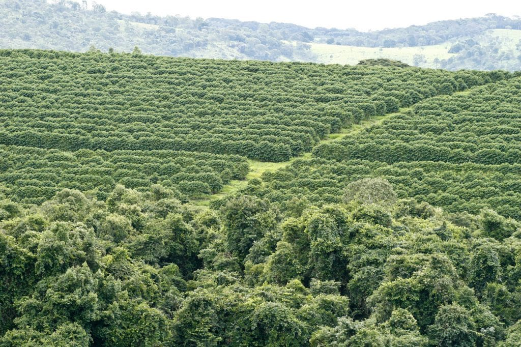 A coffee plantation in Brazil